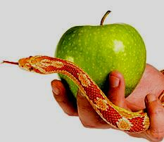 Apple and the snake1