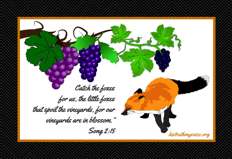 Little Foxes Spoil the Vines