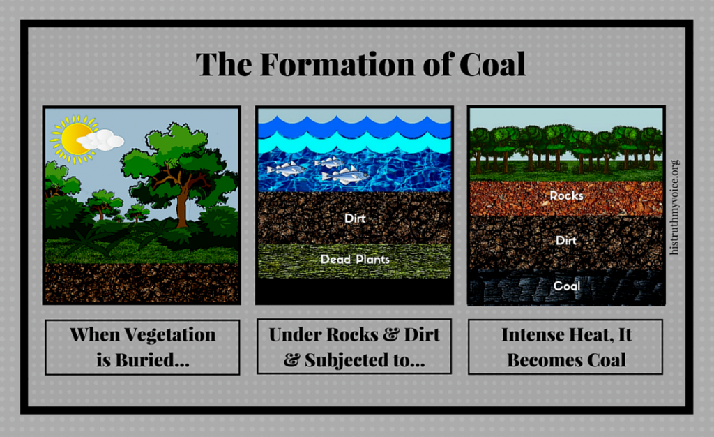 The Formation of Coal